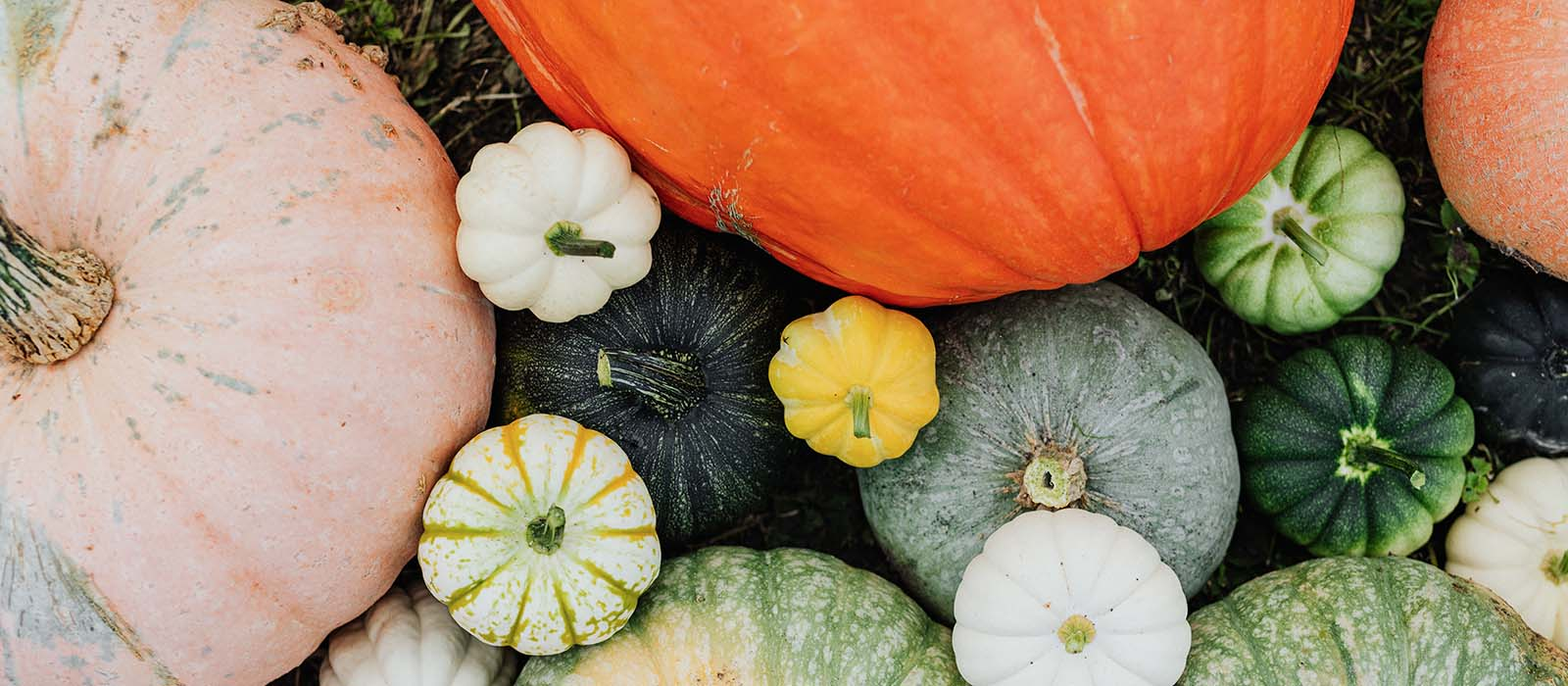 It's Pumpkin Time Again: Health Benefits & Bonus Recipe